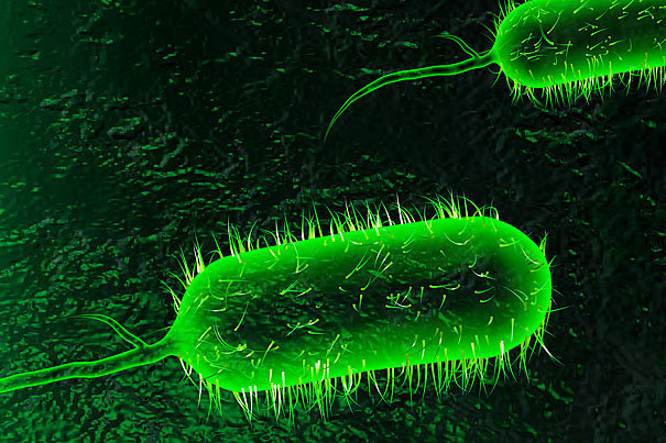 Tehran to host 18th intl. congress of microbiology