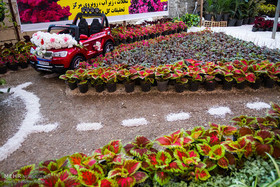 Plant Market in eastern Isfahan meets world latest technology