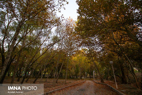 A Thousand Colored Autumn in Najvan Forest Park, 2017