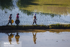 Beauties of paddy fields