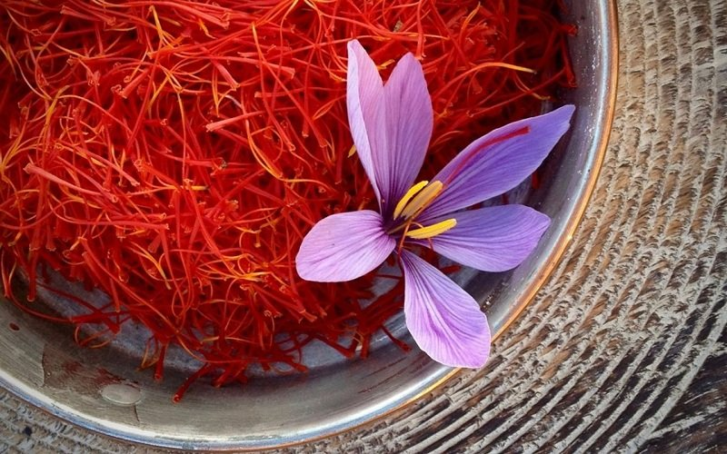 Cultivated land area of saffron in Isfahan is more than 1200 hectares