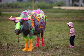 A girl stands next to a painted buffalo, an entrant in a contest that is part of the Tich Dien festival celebrating the importance of agriculture