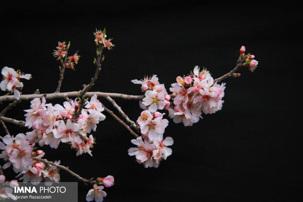 Spring is here with dazzling blossoms
