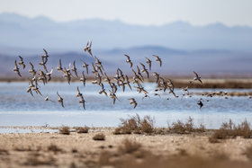 Gavkhouni replenished, migratory birds backed