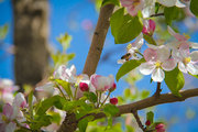 Discover spring in Semirom